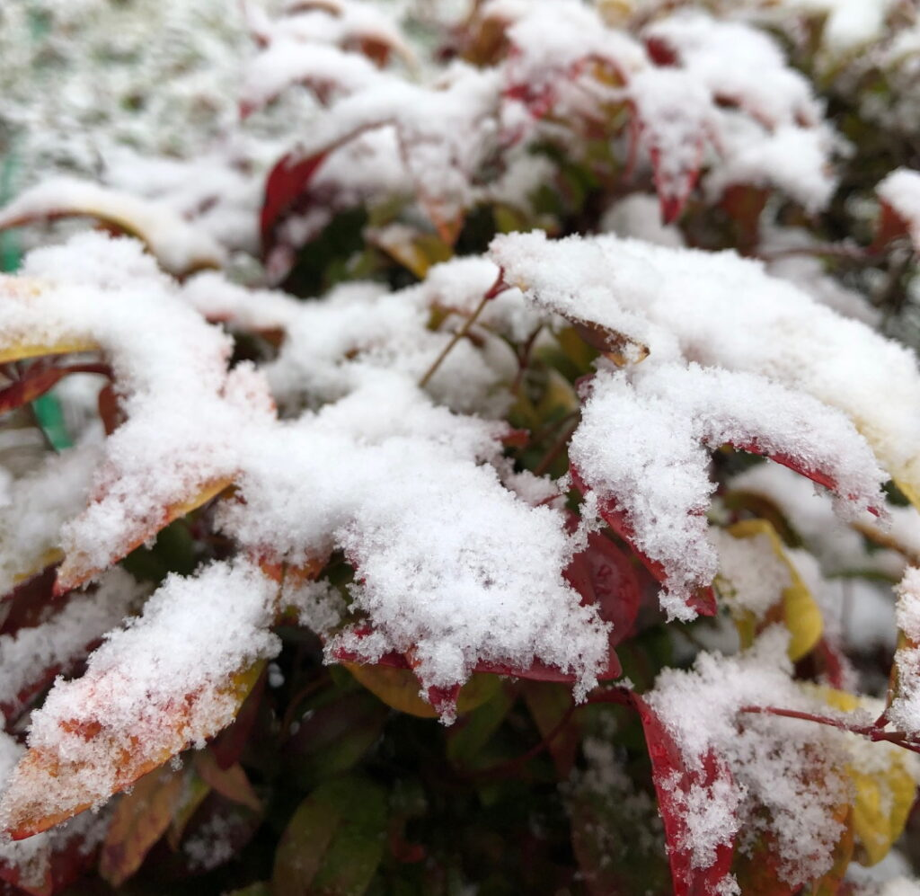 Indoor Activity Ideas for Kids - Snow on plant