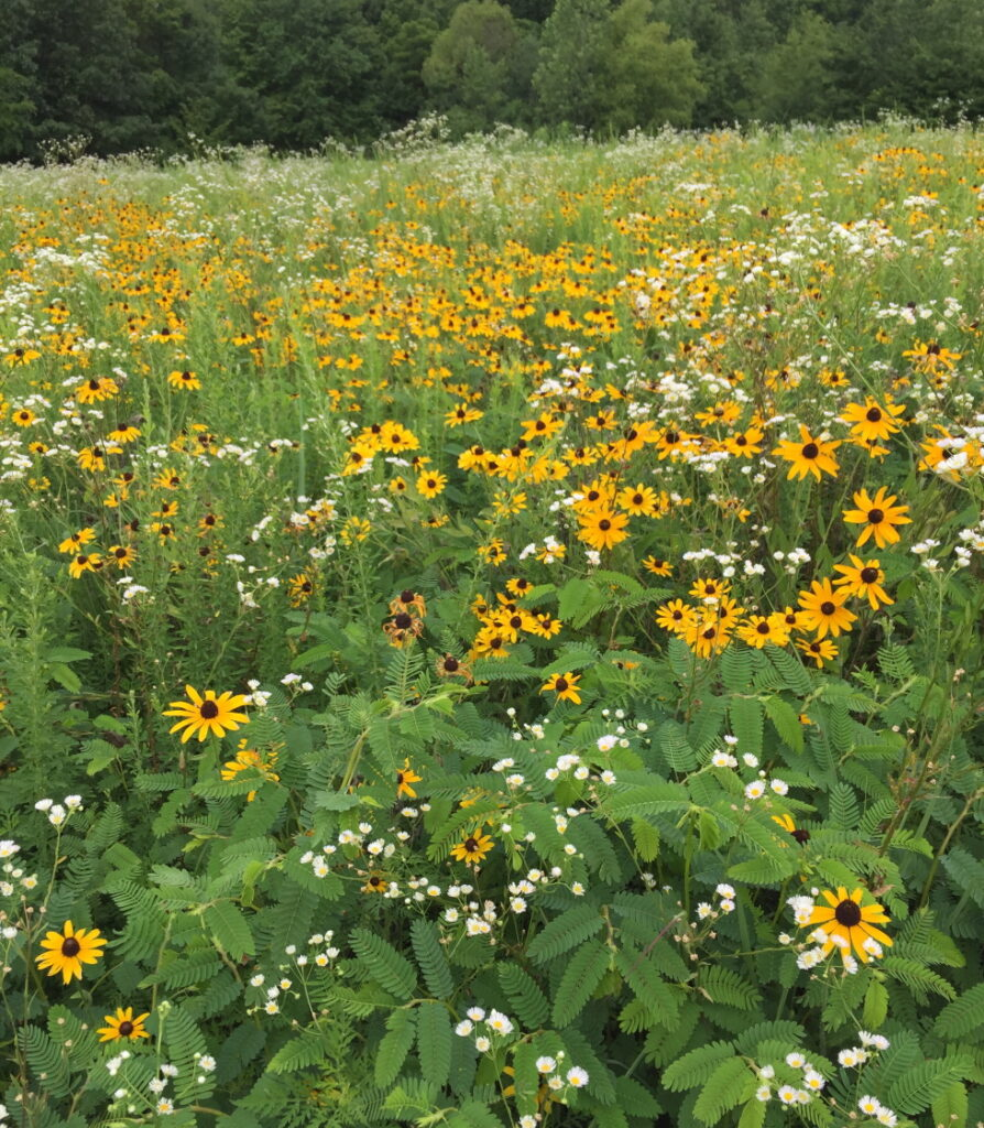 Keep our lands clean. Yellow wildflowers