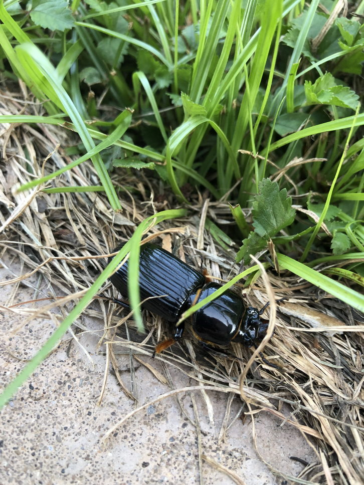 Bug in the grass
